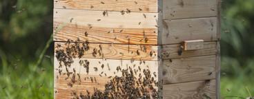 Beekeeping  04