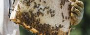 Beekeeping  05
