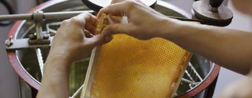 Beekeeping  06