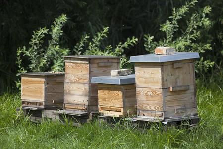 Beekeeping  07
