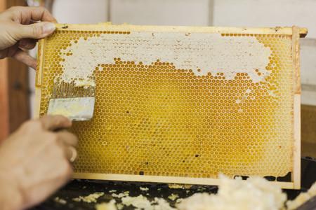 Beekeeping 08