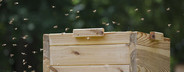 Beekeeping  10