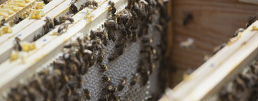 Beekeeping  12
