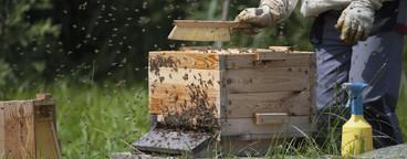 Beekeeping  13