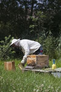 Beekeeping 14