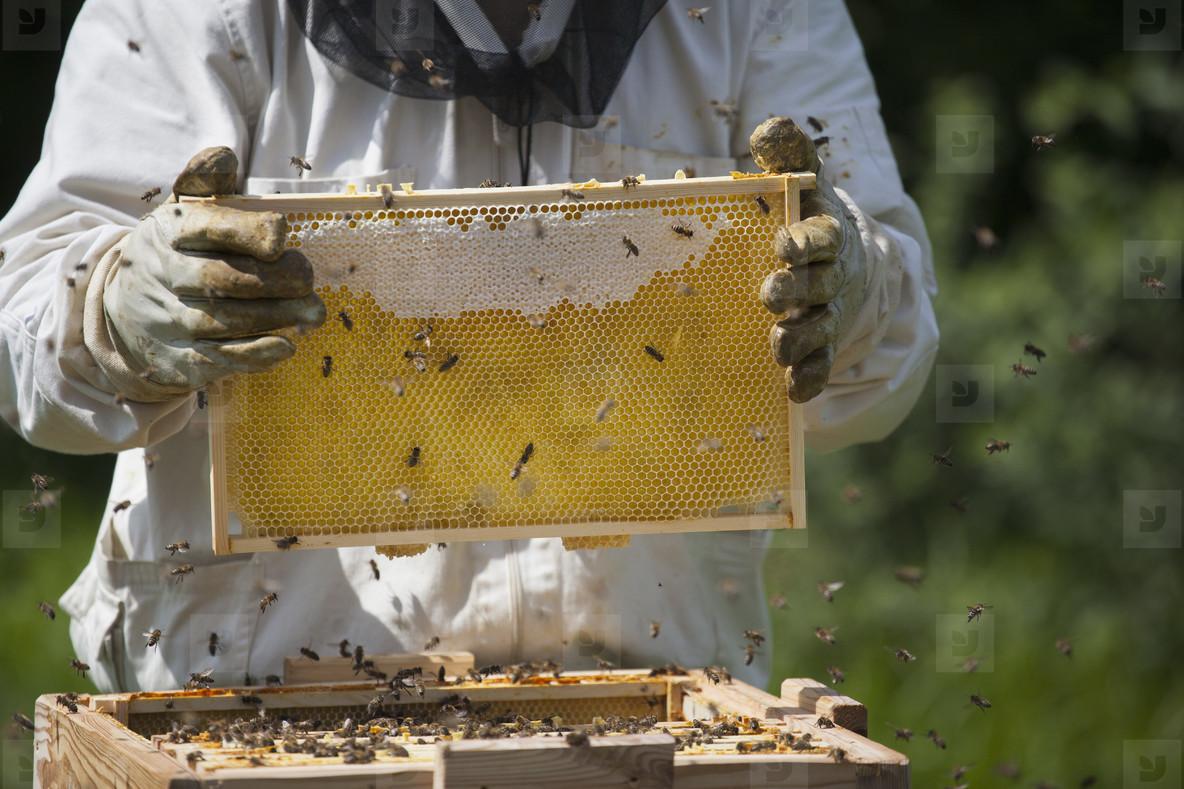 Beekeeping  15