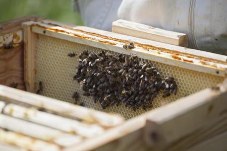 Beekeeping 18