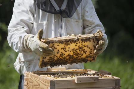 Beekeeping 20