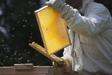 Beekeeping 21