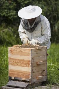 Beekeeping 22