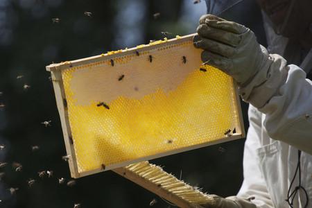 Beekeeping  24
