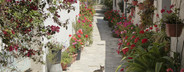 Cyprus Scenics  15