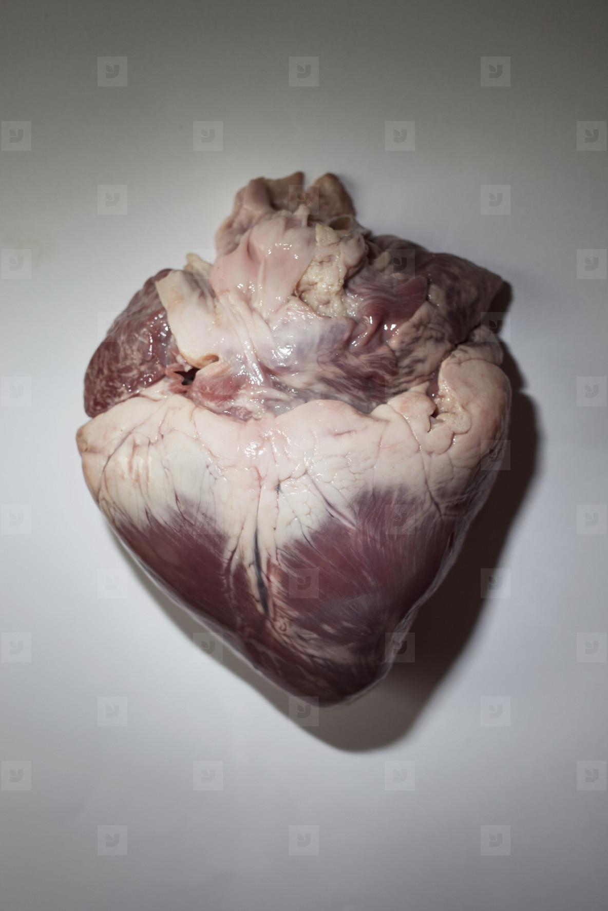 Adventurous Heart  09