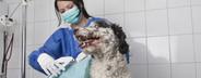 Veterinarian Clinic  04