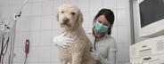 Veterinarian Clinic  11
