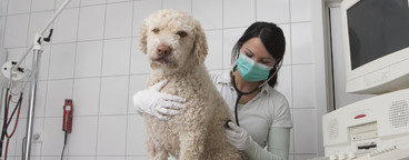 Veterinarian Clinic  11