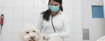 Veterinarian Clinic  33