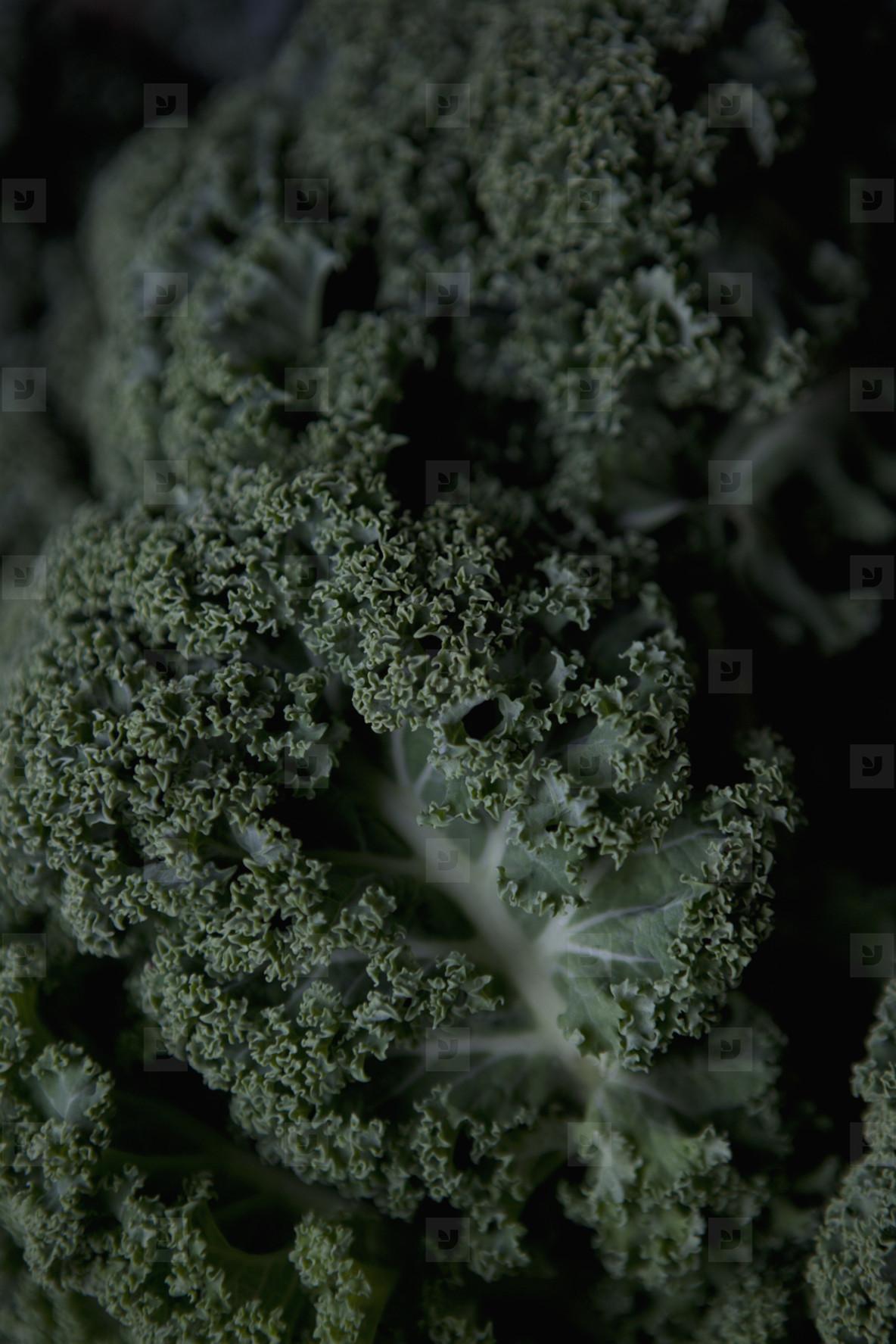 Fresh Food Rustic Remix  06