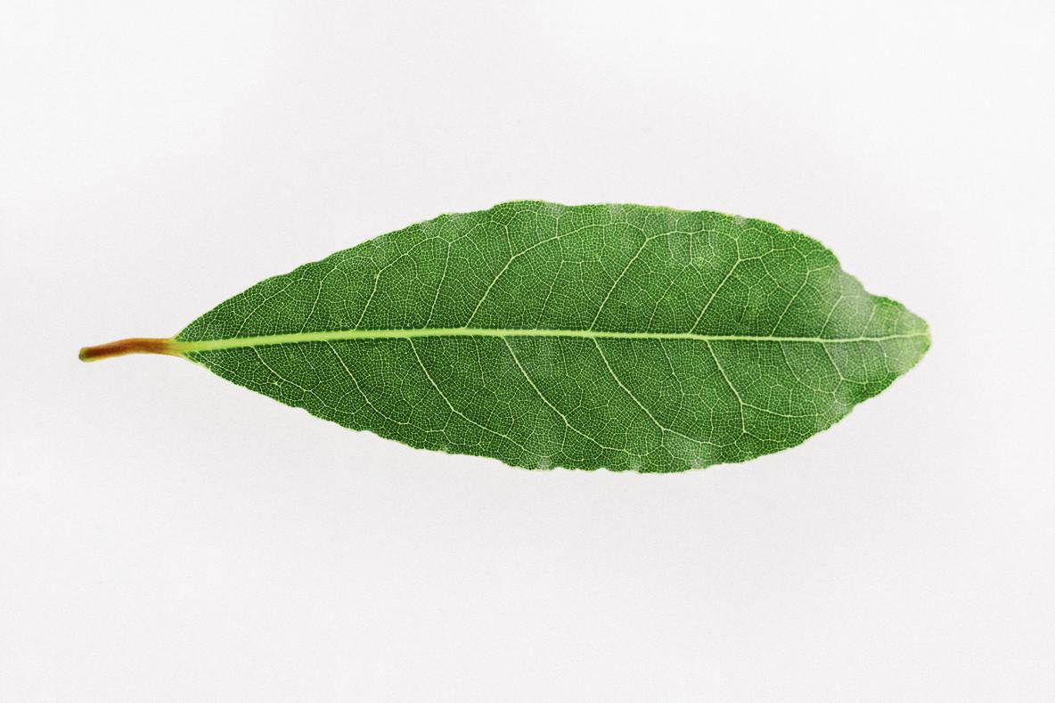 Leafy Greens  06