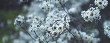 Dried flowers in wintertime