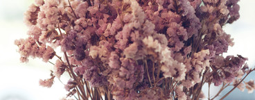 Static flower Lavender