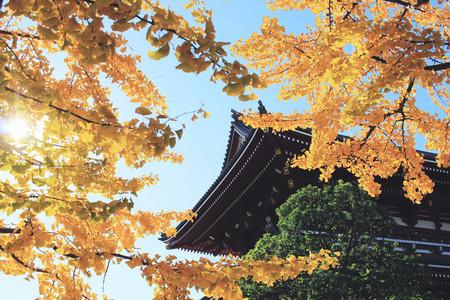 Sensoji ji Temple in Tokyo