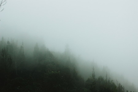View of misty forest