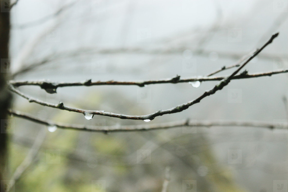 Branch with raindrop