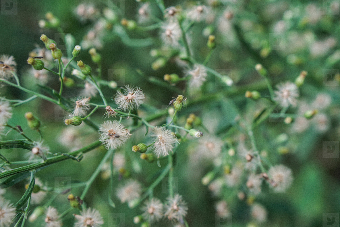 white little grass flowers