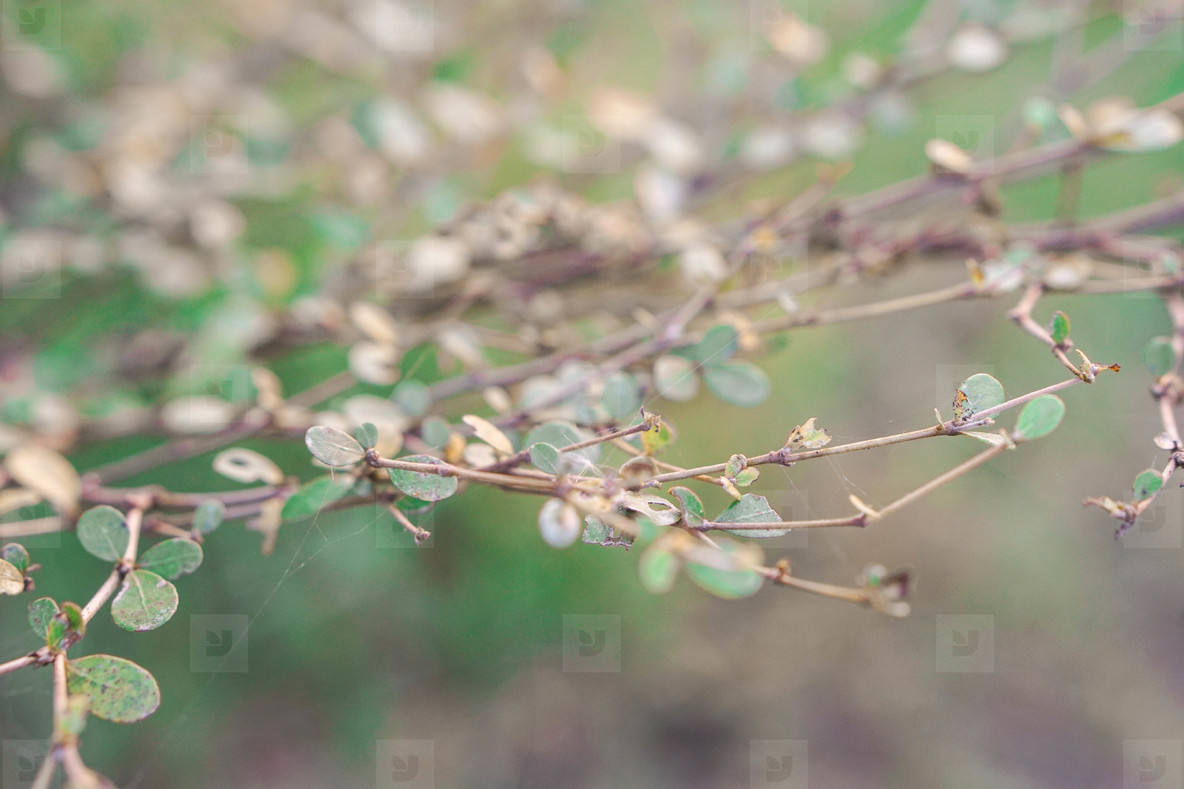 little leaves on branches