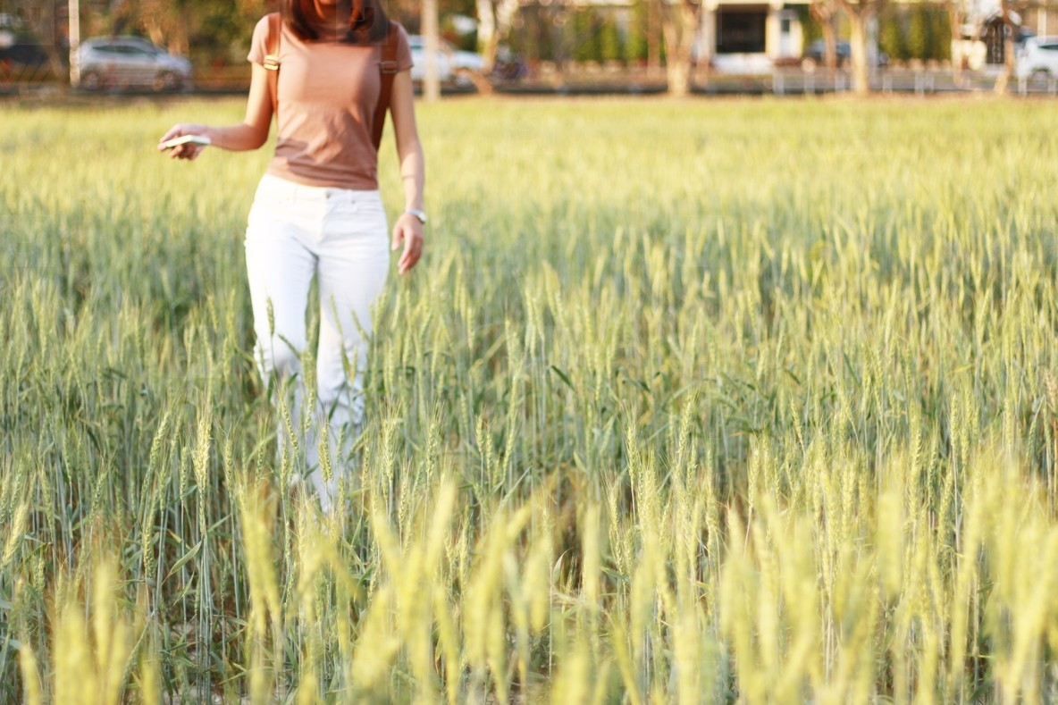 Young girl in wheat field  01