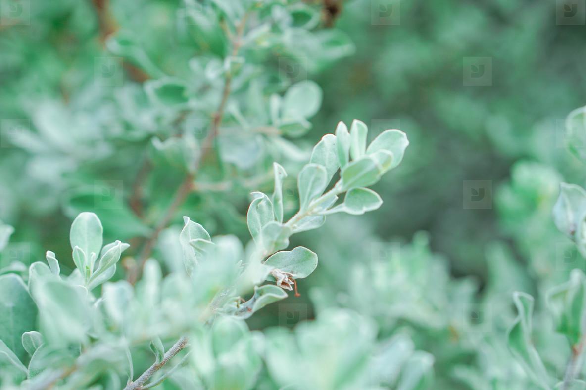 Natural Leaf  01