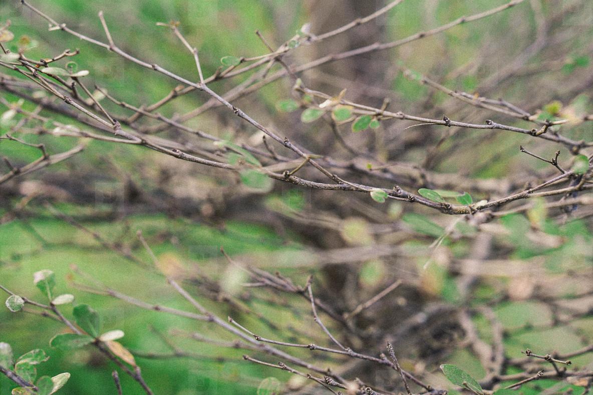 Natural Leaf  02