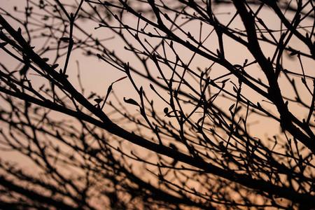 Natural Leaf 05