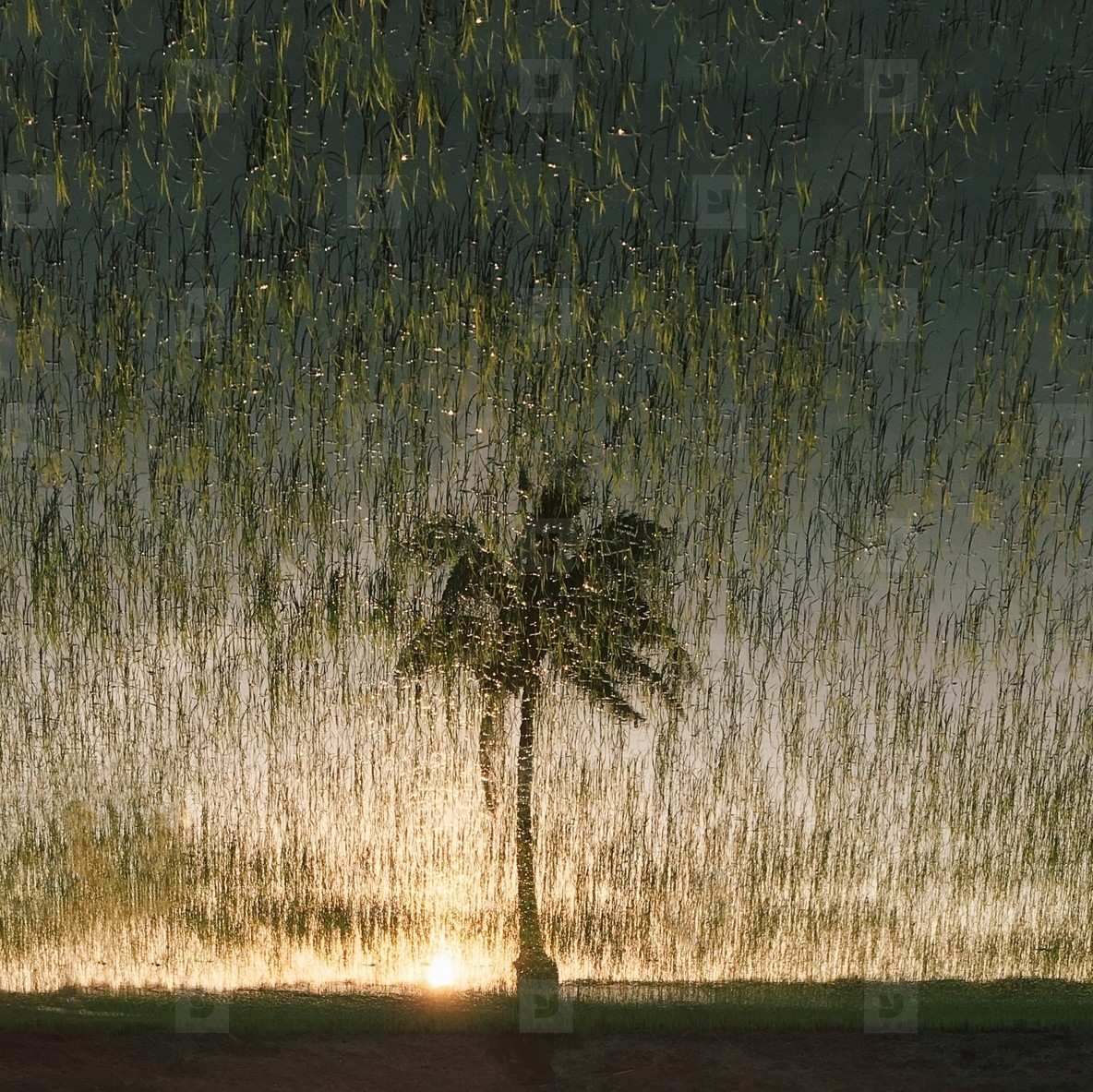 Reflections of palm tree