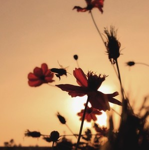 Silhouette photo 02