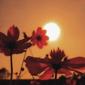 Silhouette photo  03