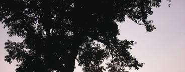 Silhouette photo  19