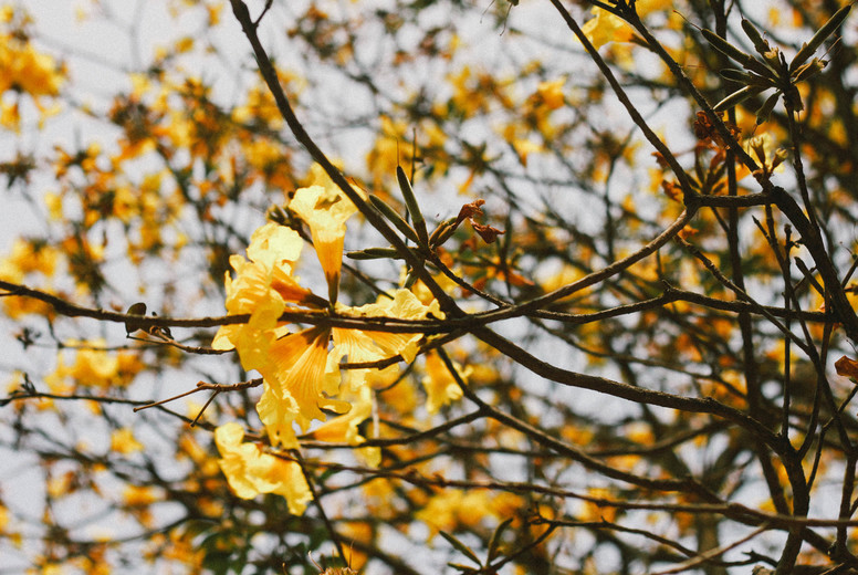 Autumn Blossom  02