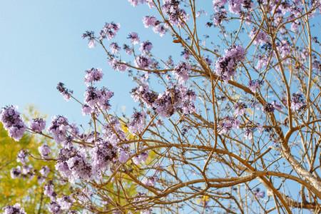 Autumn Blossom 03
