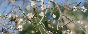 Autumn Blossom  04