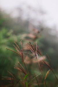 Field of grass 02