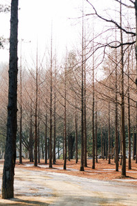 Nami Island  South Korea 01