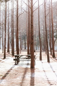 Nami Island  South Korea 04