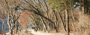 Nami Island  South Korea  05
