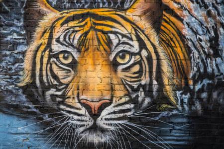 Urban Tiger