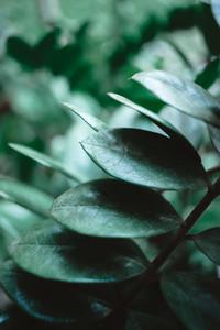 Botanical Garden 01