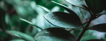 Botanical Garden 02