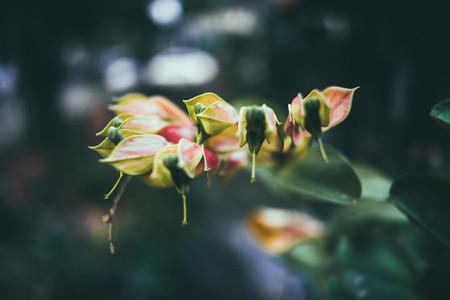 Dark Garden 12