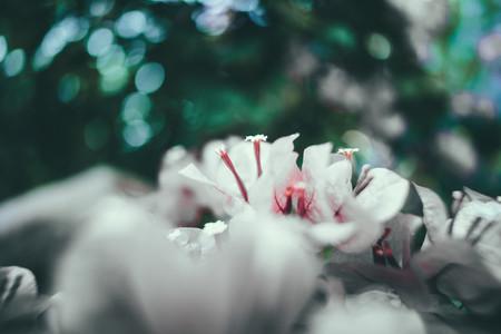Dark Garden 09